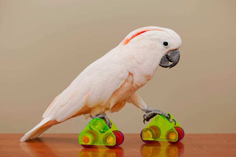 Uala-on-roller-skates