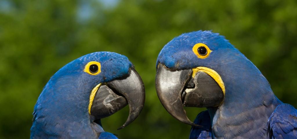 macaw-slider