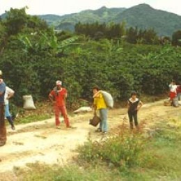 Coffee bean pickers