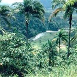 'Jungle Train'  photo – Costa Rica