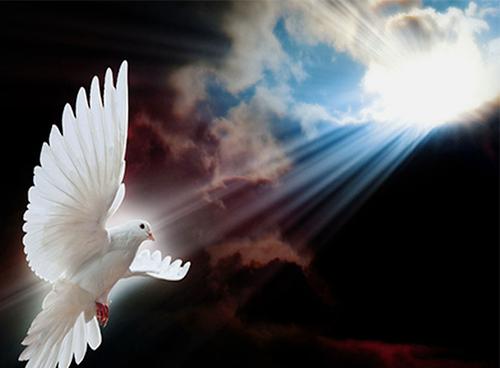 Birds of Faith