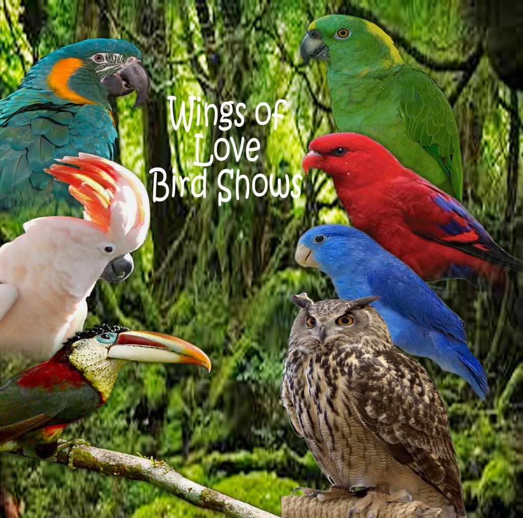 Meet these incredible rare birds