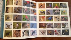 Birds and Blossoms coloring book of two pages of bird photographs
