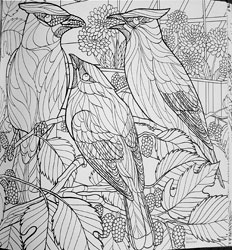 Birds and Blossoms coloring book of birds to color