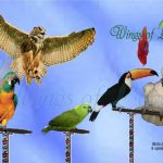 The most amazing and beautiful group of birds you'll ever see!