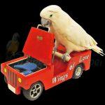 Bird on a toy bus
