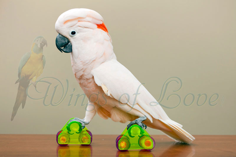 Featured event image for Rare Jewels of the Rainforest, featuring Uala on roller skates